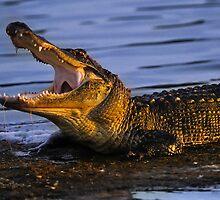 Gator Yawn by Joe Jennelle