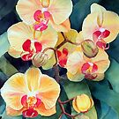 Orchid by Ann Mortimer