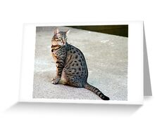 Cute Egyptian Mau Greeting Card