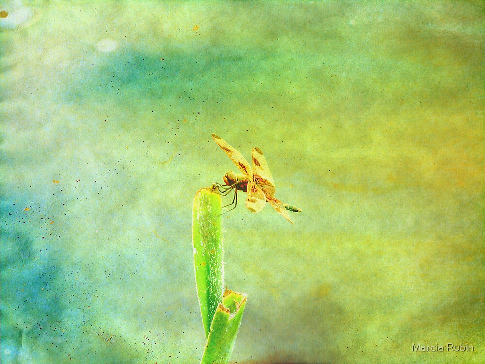 Art of the Dragonfly by Marcia Rubin