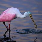 Aqua Headed Spoonbill by Joe Jennelle