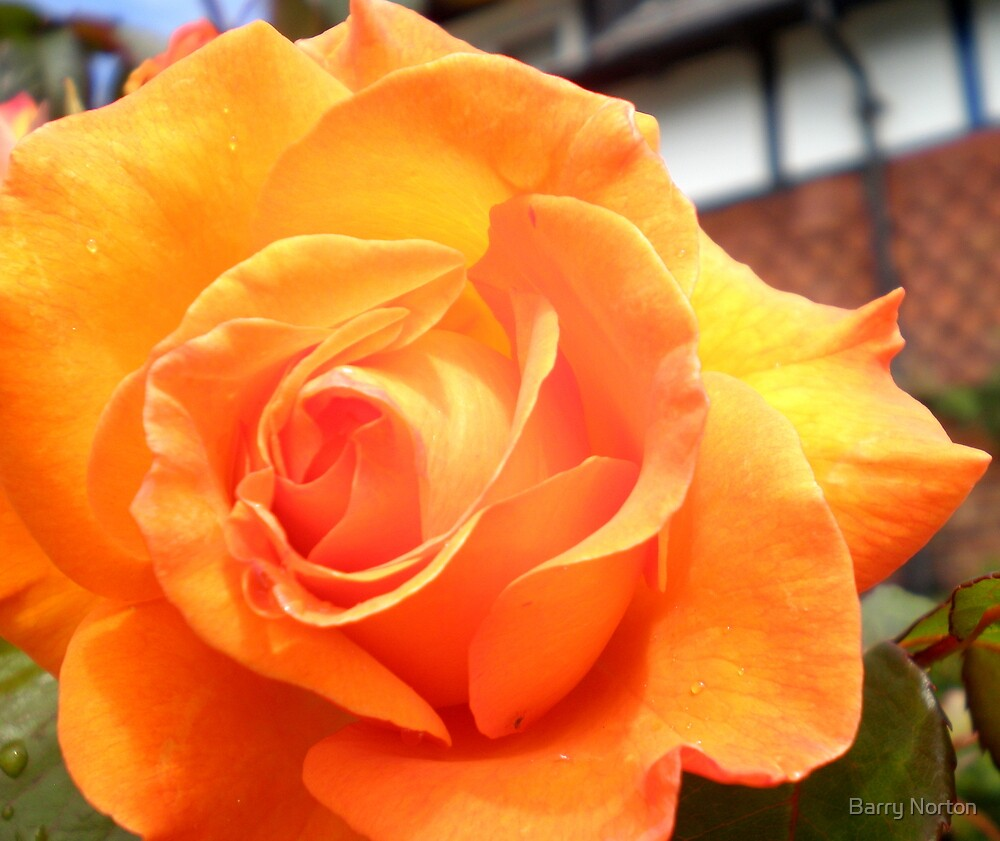Just Peachy by Barry Norton
