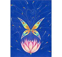 Lotus Butterfly Photographic Print