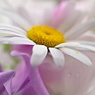 Delicate by George Swann