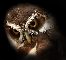 The Appearance of Wise Owl by Mark Hughes