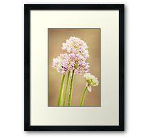 Flower in summer Framed Print