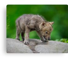 Sniffing Along Canvas Print