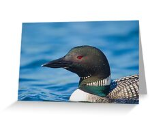 Portrait of a Loon  Greeting Card