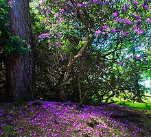 Rhodoendron Tree by Elaine123