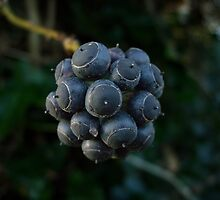 Blue Ivy Berries in Winter by Conor Donaghy