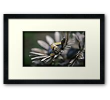 over time the memory fades Framed Print