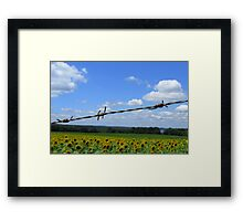 Barbed Wire Beauty Framed Print