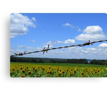 Barbed Wire Beauty Canvas Print