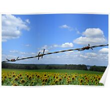 Barbed Wire Beauty Poster