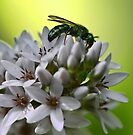 Gooseneck Loostrife and Metallic Green Bee by T.J. Martin