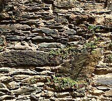 TLC - Lovely Stone Wall by TLC1TLC