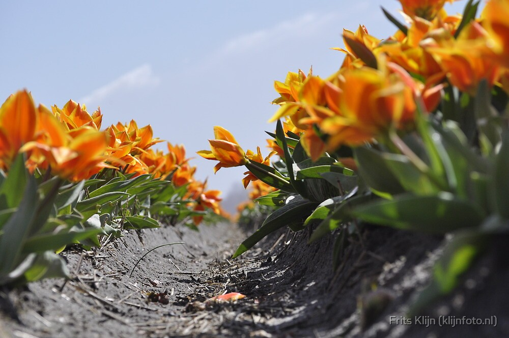 Orange Tulips by Frits Klijn (klijnfoto.nl)