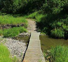 Footbridge Over a Creek by rhamm