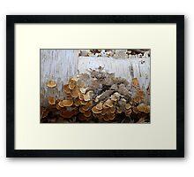 Birch and Fungi 4 Framed Print