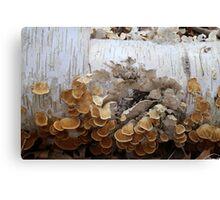 Birch and Fungi 4 Canvas Print