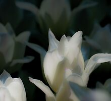 White Petals by HEGOM
