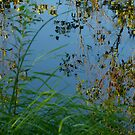 Reflections on the Au Sable by jrier
