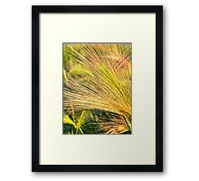 Foxtails 2 Framed Print