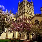 Exeter Cathedral Cafe by Charmiene Maxwell-batten