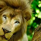 I am the KING by Christopher Gaines