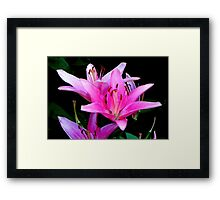 Pretty in Pink!!! © Framed Print
