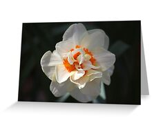 Blooming Double Daffodil  Greeting Card