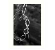 Forest Ribbon BW Art Print