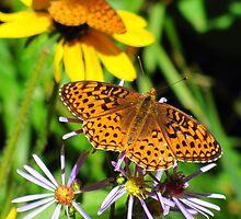 Butterflies by Bill Hendricks