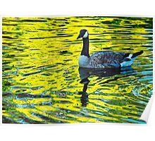 Lake Merritt reflection Poster