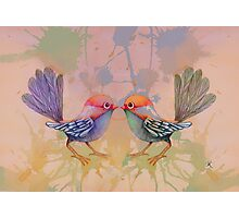 little love birds pink Photographic Print