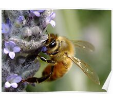 Bee My Honey Bee Poster