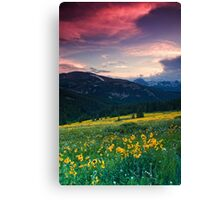 Alpine Sunflower Meadows Canvas Print