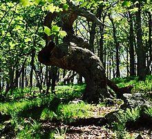 TLC - Curly Tree by TLC1TLC