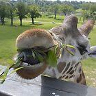 Giraffe  by 24Flowers