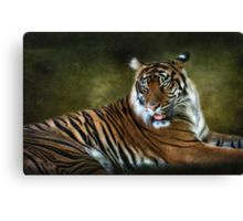 Tale of a Tiger  Canvas Print
