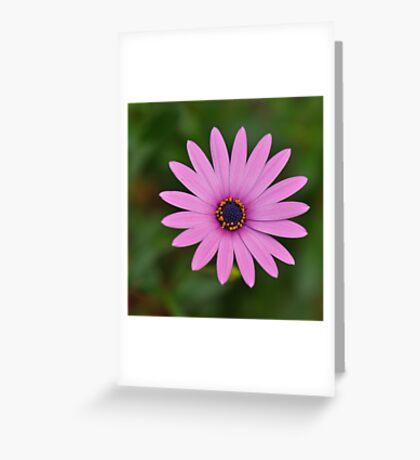 Simplicity ~ Greeting Card