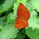 Butterfly by Shiju Sugunan