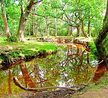 New Forest Stream by Colin  Williams Photography