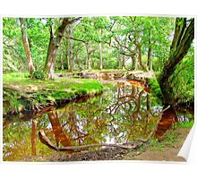 New Forest Stream Poster