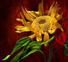 hello sun! by carol brandt