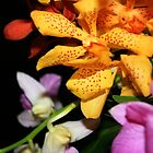 Orchids by EducatedSavage