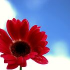 Flower in the Sky by EducatedSavage