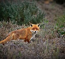On The Prowl by Stephen Ruane