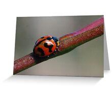 Ladybug macro Greeting Card