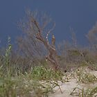 Stormy Skies on Assateague Beach by Mary Jo Taft